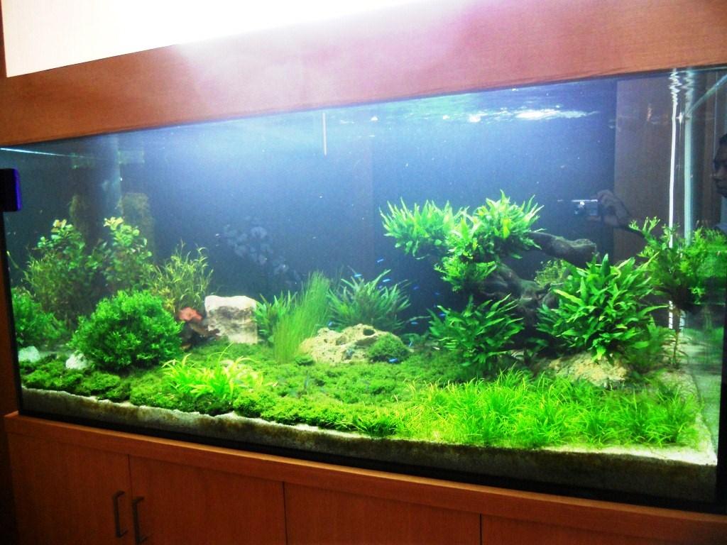 Jual Aquarium Di Bogor  jual aquarium di bogor
